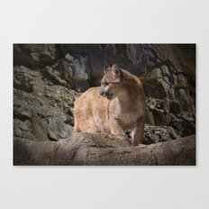 Mountain Lion on the Prowl Canvas Print