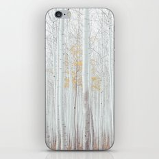 White tree forest iPhone & iPod Skin