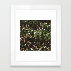 wood anemones Framed Art Print