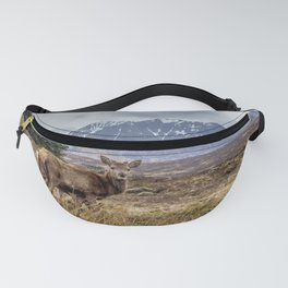 Wild red stag in the highlands, Scotland Fanny Pack