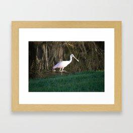 Rosy Spoonbill Framed Art Print