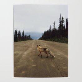 Road Fox Poster