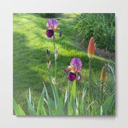 Mauve Iris and Torch Lillies.... Metal Print