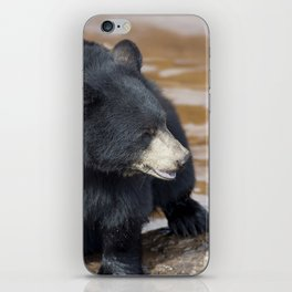 Black Bear (Ursus americans) near water iPhone Skin