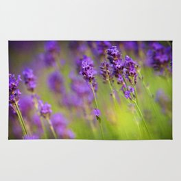 Textured background of lavender flowers Rug