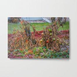 Dying Garden Metal Print