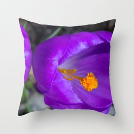 Deep purple and orange crocuses Throw Pillow
