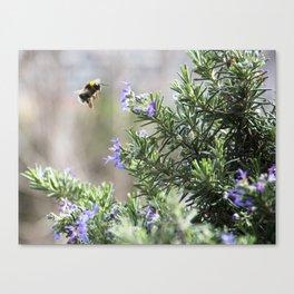 bumble bee flight Canvas Print