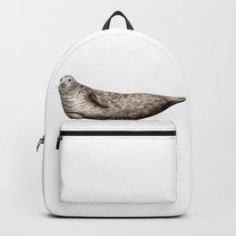 Grey Seal (Halichoerus grypus) Backpack