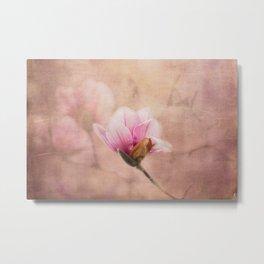 Pink Magnolia II - Flower Art Metal Print