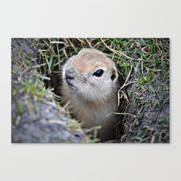 Hi....It's Me! Canvas Print