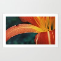 The Lily and The Ant Art Print
