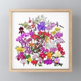 A celebration of orchids Framed Mini Art Print