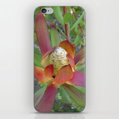 Succulent I iPhone & iPod Skin