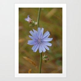 Purple Flower Art Print