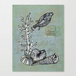 Vintage Shells Canvas Print