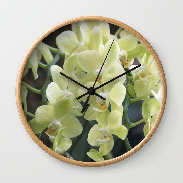 Longwood Gardens Orchid Extravaganza 69 Wall Clock