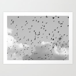 Black and withe birds with clouds Art Print