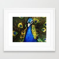 modest mouse Framed Art Prints featuring Modest Peacock by Erin Glynn