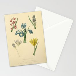 hyacinthus orientalis muscari comosum iris xiphioides colchicum autumnale tulipa sylvestris15 Stationery Cards