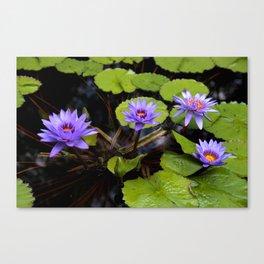 Water Lily Dreams Canvas Print