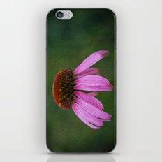 Purple Coneflower iPhone & iPod Skin