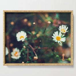 Camomile meadow nature background. Soft focus. Serving Tray