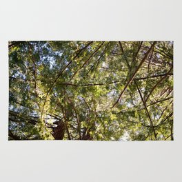 Redwood Ceiling  Rug