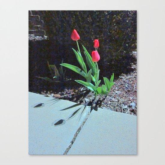Three Red Tulips Canvas Print