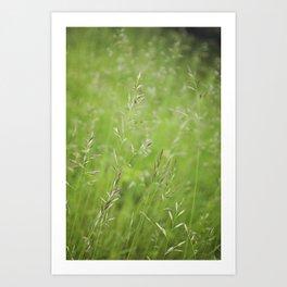 Summer Softness by Althéa Photo Art Print