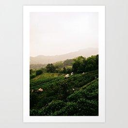 Taiwan - Maokong Mountain: Harvesting Green Tea Kunstdrucke