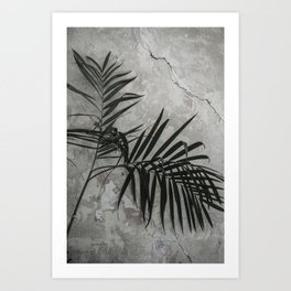 Rustic Wall and Palm of Mexico City | Travel Photography Art Print