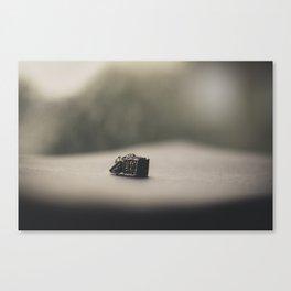 Little Secret Box (2) Canvas Print