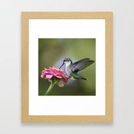 Tranquil Hummingbird Framed Art Print