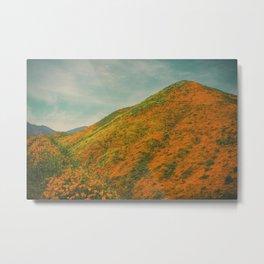 California Poppies 025 Metal Print