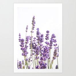 Purple Lavender #1 #decor #art #society6 Art Print