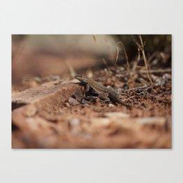 The Smirking Lizard Canvas Print