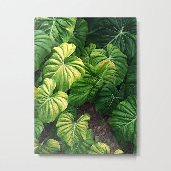 Australia tropical plants Metal Print