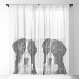 Black and White Bernese Mountain Dog Sheer Curtain