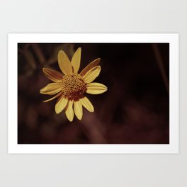 Yellow coneflower/sunflower Art Print