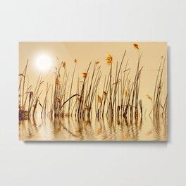Grass 067 Metal Print