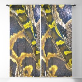 Golden Boa Blackout Curtain