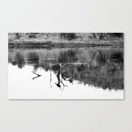 bird reflections Canvas Print
