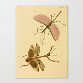 Naturalist Stick Bugs Canvas Print