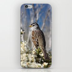White-crowned Sparrow iPhone & iPod Skin