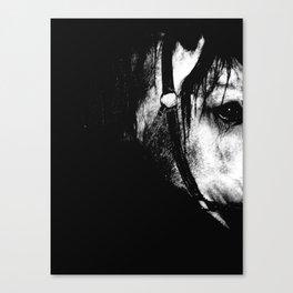 A look a trotter Canvas Print