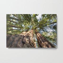Below the Redwoods Metal Print