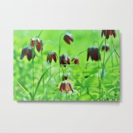 Chequered lily Fritillaria Meleagris Metal Print