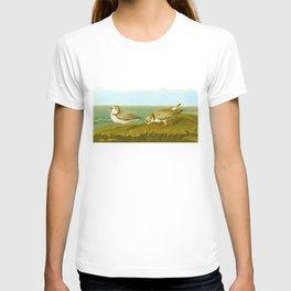 Piping Plover Bird T-shirt