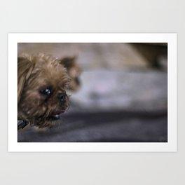 Grampa The Dog Art Print